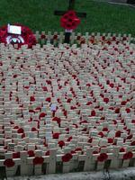 Image for Remembrance Sunday - UK Autism Foundation Pays Tribute to our Heroes